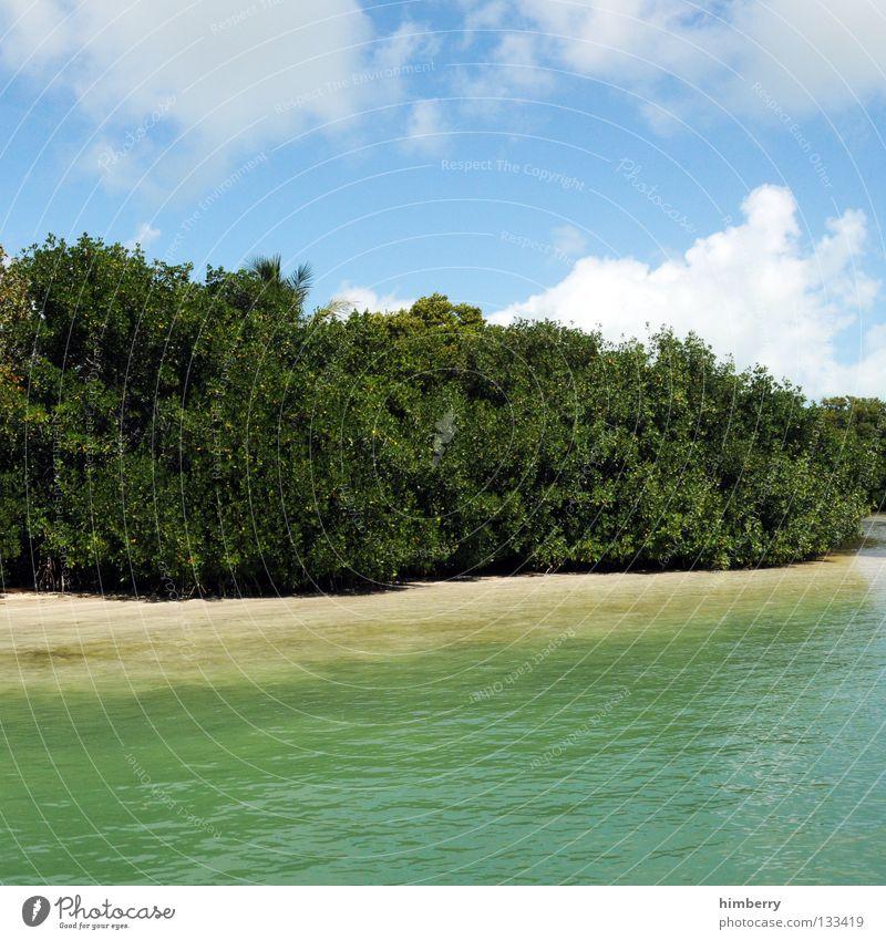 waterworld Natur Meer Küste Gewässer Baum Sträucher Wolken Himmel Park Nationalpark Botanik Pflanze Tier Florida Strand Wasser wasserwelt Erde Sand caribic