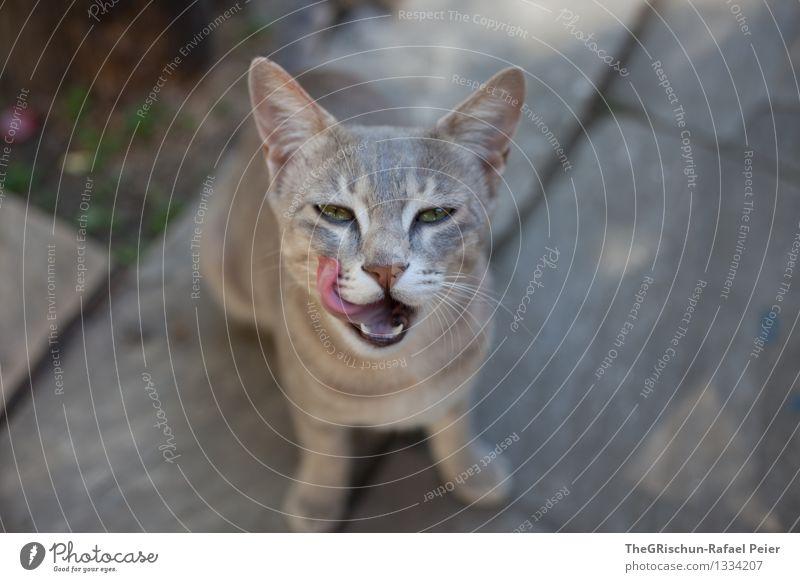 lecker Katze weiß Tier schwarz Auge Essen grau rosa weich Lebewesen Zähne Ohr Fell Haustier Pfote