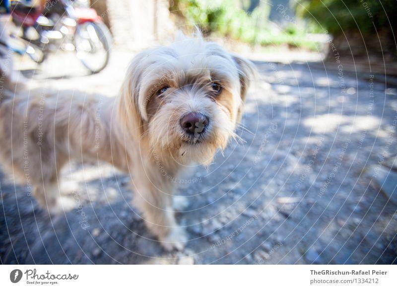 le petite chien Tier Haustier Hund 1 blau grau schwarz silber weiß Lebewesen Neugier Nase Schnauze vierbeiner Freundschaft Fell Haare & Frisuren herzlich Geruch