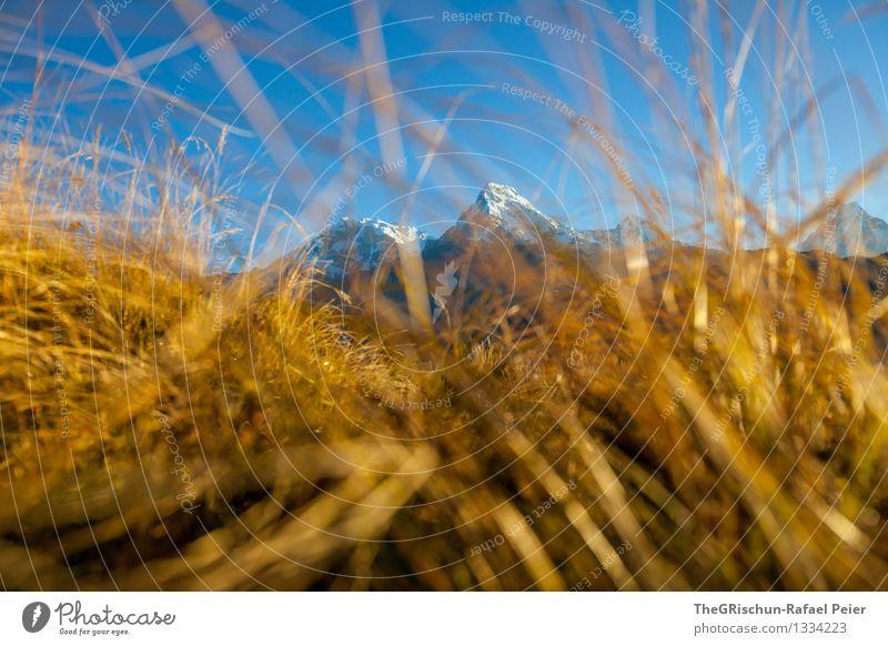 Goldiges Gras Umwelt Natur Landschaft blau braun gelb gold schwarz weiß niedlich Berge u. Gebirge Gipfel Wiese glänzend Beleuchtung Halm Nepal Aussicht Farbfoto