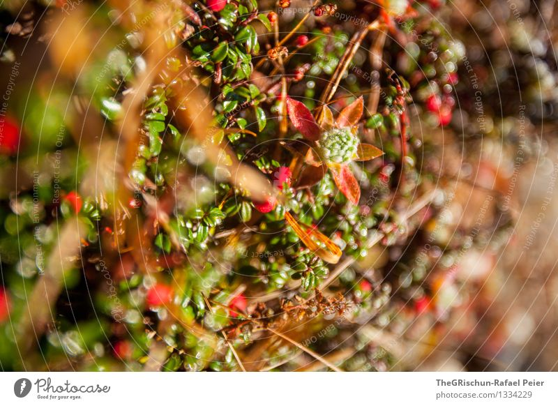 Detail Natur Pflanze grün rot schwarz gelb Gras rosa Kräuter & Gewürze Halm Tau Grünpflanze