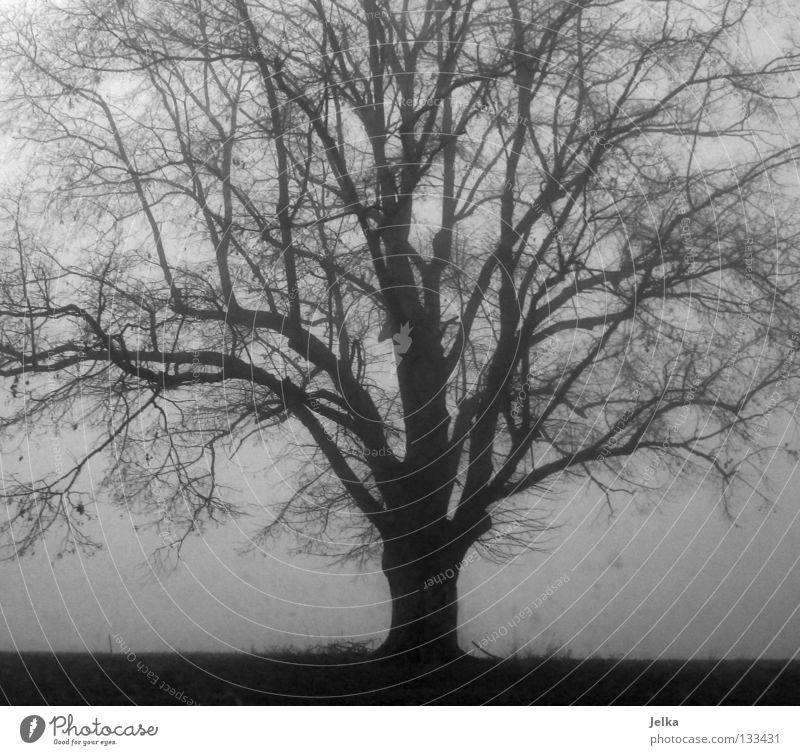 der schwarze wald. Natur Baum grau Nebel Ast Zweig verzweigt Zypresse Lebensbaum