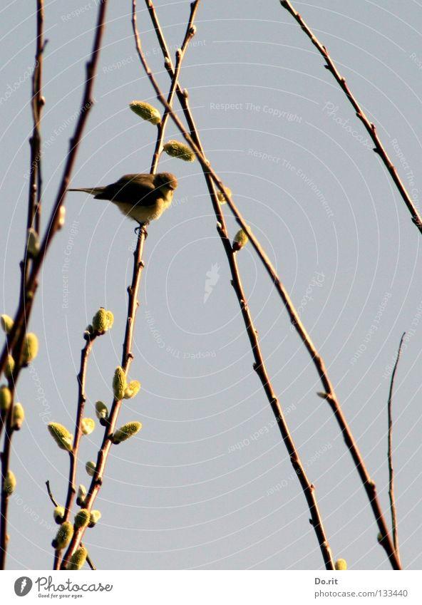 Der Mai ist gekommen... blau schön Tier ruhig Erholung Vogel Zufriedenheit sitzen Wildtier Fröhlichkeit Romantik weich Ast Warmherzigkeit zart Schönes Wetter