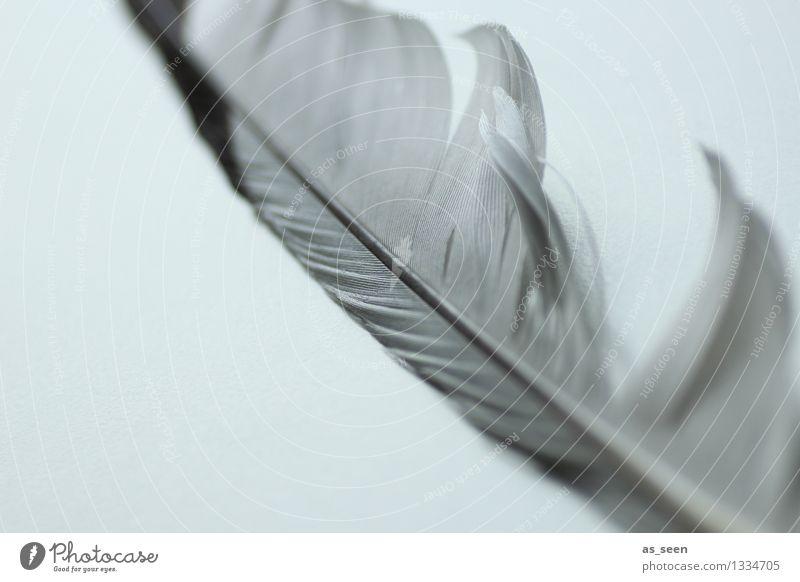 Feder im Wind Natur Ferien & Urlaub & Reisen ruhig Tier schwarz natürlich Tod grau fliegen Vogel Luft ästhetisch authentisch Flügel