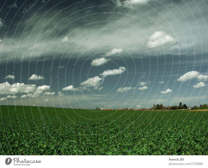 Inningen bei Augsburg II Wolken Himmel grau Pol- Filter Baum Gras Feld Horizont Baumreihe grün Altokumulus floccus Landwirtschaft leer Ferne Sonntag genießen