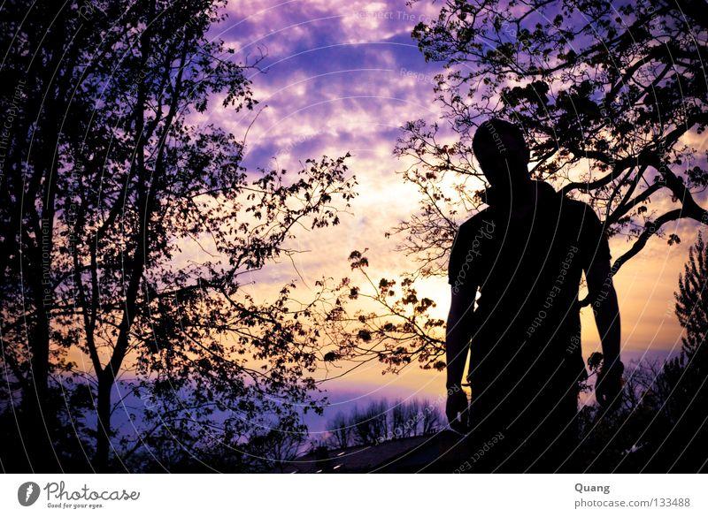 Vanilla Sky 1 Sonnenuntergang Horizont Gegenlicht Potsdam Wolken Blatt Mann violett gelb Himmel Vanille Skyline Ferne Frieden Silhouette Ast Christian orange