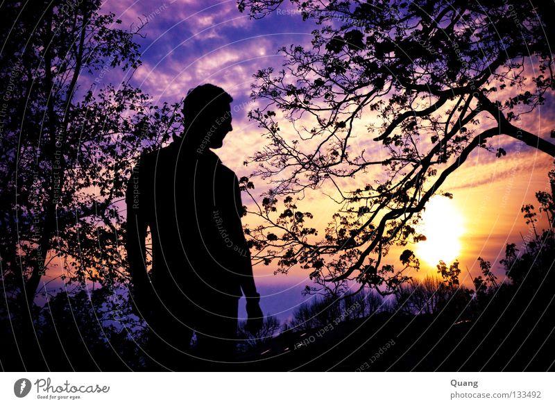 Vanilla Sky 2 Himmel Mann Sonne Blatt Wolken Ferne gelb Horizont orange Kraft Ast violett Frieden Skyline Potsdam