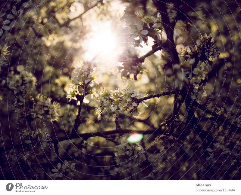 Ein weiterer Lichtblick Baum Sonne Sommer gelb dunkel Wiese Blüte Frühling hell glänzend Hoffnung Sträucher violett Ast Blühend Verlauf