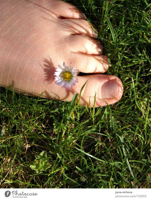 barfuß. Barfuß Gras grün grasgrün Sommer Frühling April Mai sommerlich Gänseblümchen Sonnenlicht Halm Zehen Zehennagel Morgen weich Physik Gesundheit Freude Fuß