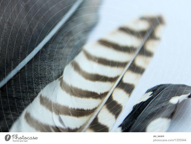 Federschmuck elegant Wellness harmonisch ruhig Meditation Basteln Accessoire Schmuck Vogel Möwe berühren fliegen ästhetisch exotisch einzigartig kuschlig