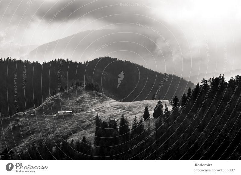 Lichtblicke Umwelt Natur Landschaft Urelemente Wolken Herbst Klima Wetter schlechtes Wetter Nebel Baum Wald Hügel Alpen Berge u. Gebirge Haus Hütte Bewegung