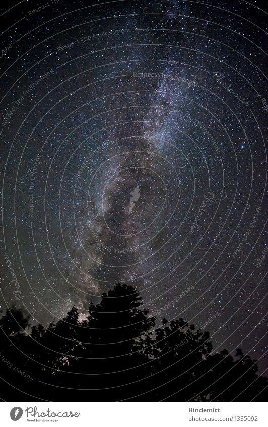 300 – Hoch oben Himmel Wolkenloser Himmel Nachthimmel Stern Herbst Schönes Wetter Baum stehen leuchten ästhetisch außergewöhnlich dunkel gigantisch