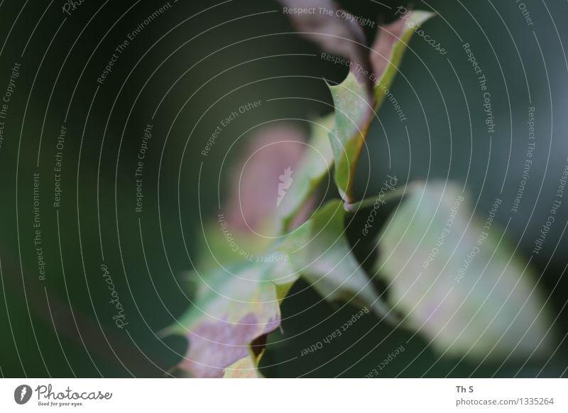 Herbst Natur Pflanze grün Blatt ruhig Bewegung natürlich braun elegant authentisch ästhetisch einfach einzigartig Gelassenheit harmonisch