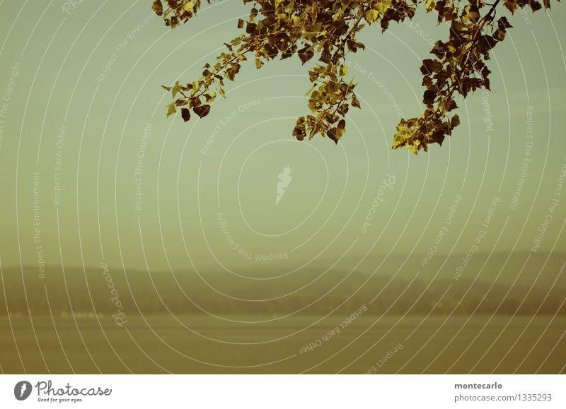 das andere ufer Umwelt Natur Landschaft Urelemente Luft Wasser Himmel Horizont Herbst Pflanze Grünpflanze Wildpflanze Blatt Seeufer Bodensee Erholung genießen