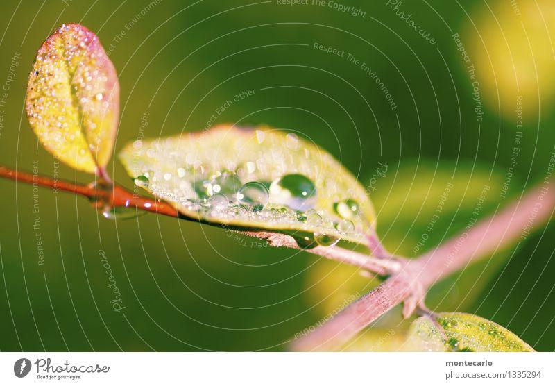 morgentau Natur Pflanze grün Sommer Wasser Blatt Umwelt gelb Wärme Herbst natürlich klein oben authentisch Sträucher Wassertropfen