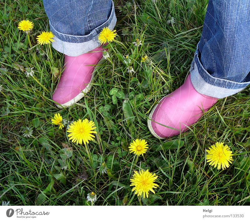 Frauenfüße in rosa Gummischuhen auf einer Wiese mit Löwenzahnblüten mehrfarbig Frühling April Mai Blumenwiese Gras Halm Blüte Blühend Blatt Stengel Klee