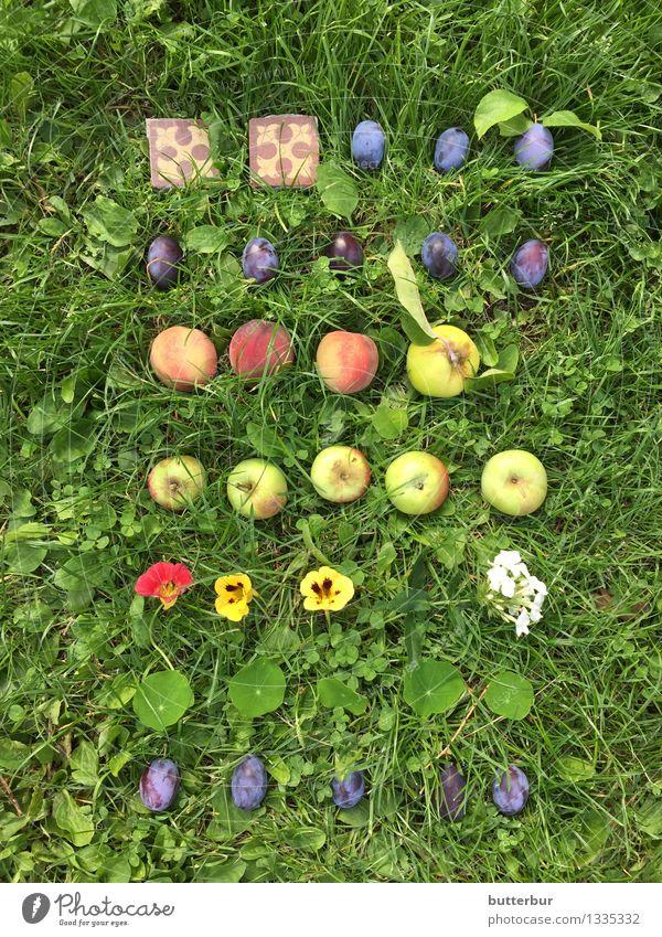 Pflaume oder Apfel? Natur Pflanze Sommer Erholung Blume Landschaft Gesunde Ernährung Blatt Blüte Herbst Gras natürlich Garten Frucht Freizeit & Hobby