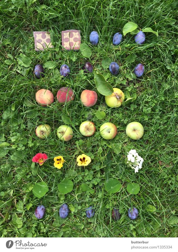 FliesePflaumePfirsichApfelKapuzinerkressen SuperStillLife Natur Pflanze grün Sommer Blume Landschaft Tier gelb Herbst Wiese Gras Spielen Garten Lebensmittel