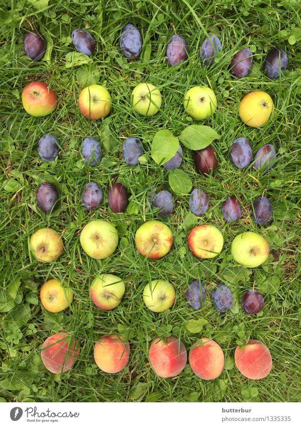 Pflaume, Plaume, Pflaume, Apfel, Pflaume..... Lebensmittel Frucht Pfirsich Ernährung Picknick Freizeit & Hobby Spielen Garten Umwelt Natur Landschaft Pflanze
