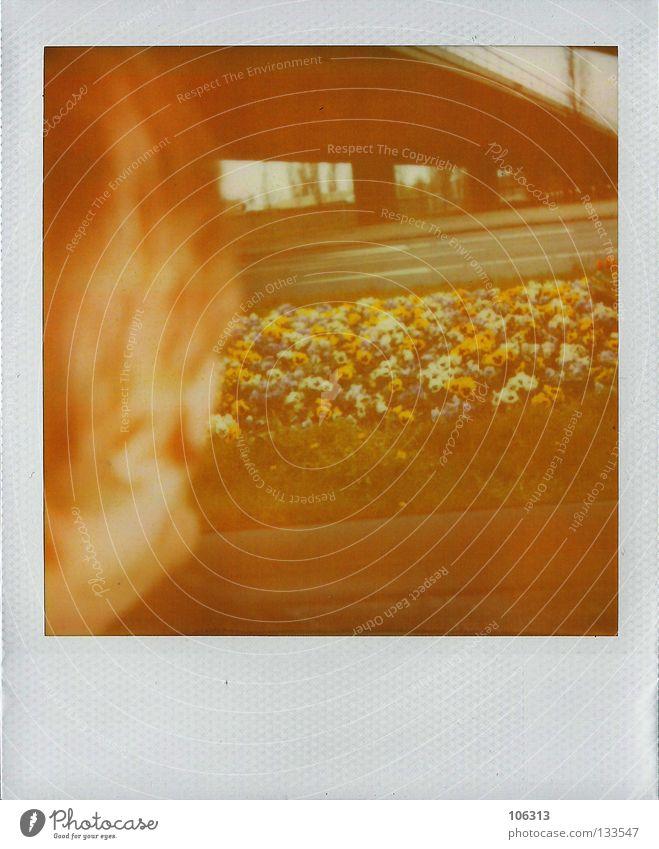 moscow in berlin (for Max) Natur alt Pflanze Farbe rot Blume gelb Hintergrundbild PKW Europa Aussicht Brücke Hoffnung Blühend fahren Bild