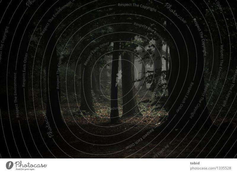 Herbst Natur Pflanze schlechtes Wetter Nebel Baum Wald bedrohlich dunkel gruselig kalt Einsamkeit herbstlich Herbstlaub Blatt Laubbaum Waldlichtung mystisch