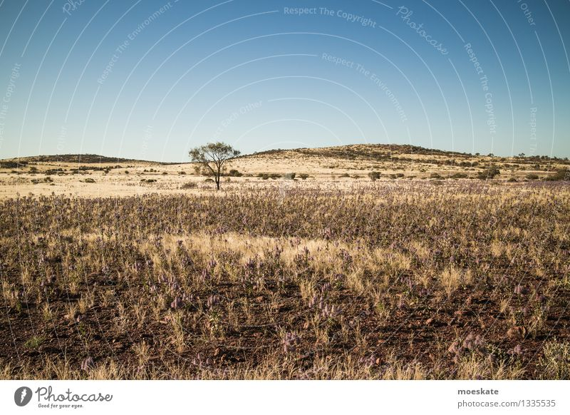 Outback Baum blau gelb Australien Wüste Steppe karg kahl Bodenbelag Hügel Erde sandboden Ferien & Urlaub & Reisen Farbfoto Gedeckte Farben Außenaufnahme