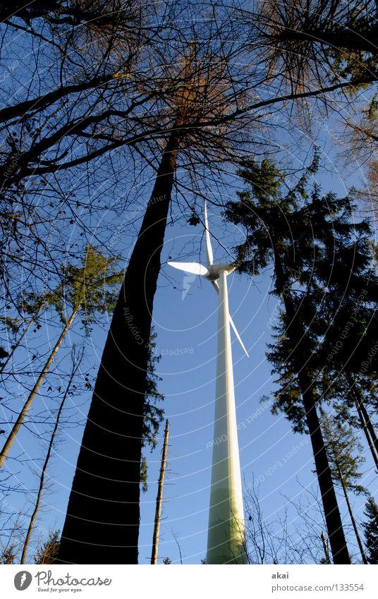 Naturpower Himmel Wald Linie Kraft Perspektive Energiewirtschaft Elektrizität Windkraftanlage Geometrie Paradies Waldlichtung Standort himmelblau Laubbaum