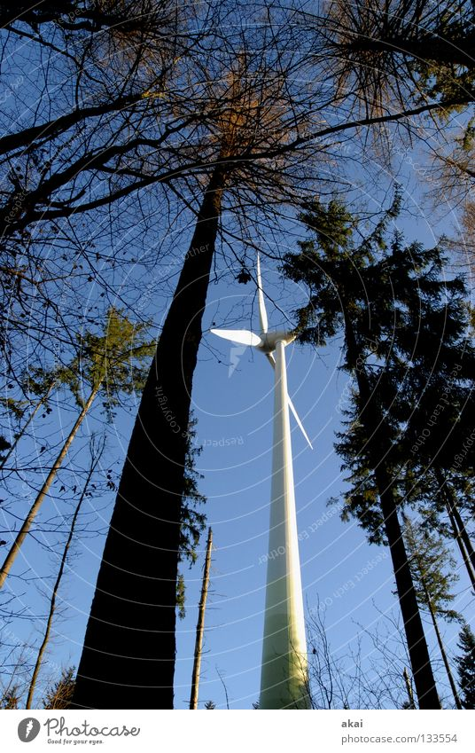 Naturpower Windkraftanlage Elektrizität Himmel Nadelbaum Wald himmelblau Geometrie Laubbaum Perspektive Nadelwald Waldwiese Paradies Waldlichtung Kraft