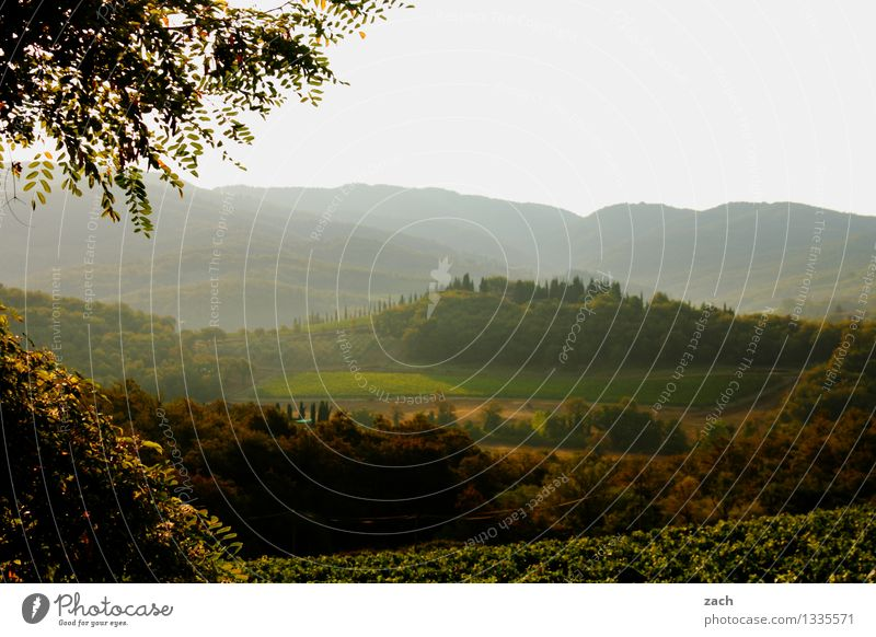 Am Morgen danach Umwelt Natur Landschaft Himmel Frühling Sommer Schönes Wetter Pflanze Baum Zypresse Wiese Feld Wald Hügel Italien Toskana grün Chianti Farbfoto