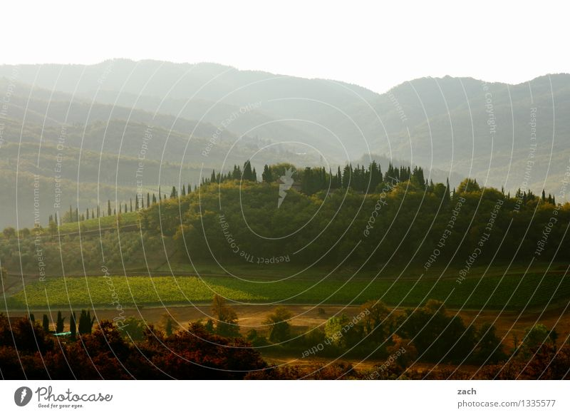 guter Morgen Umwelt Natur Landschaft Himmel Frühling Sommer Schönes Wetter Pflanze Baum Zypresse Wiese Feld Wald Hügel Italien Toskana grün Chianti Farbfoto