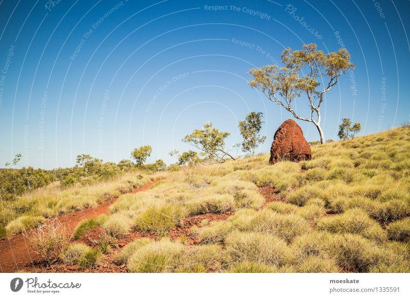 Termitenlabyrinth Umwelt Natur Landschaft Pflanze Erde Sand Himmel Wolkenloser Himmel Sommer Schönes Wetter Baum Gras Sträucher Grünpflanze exotisch Hügel Wüste