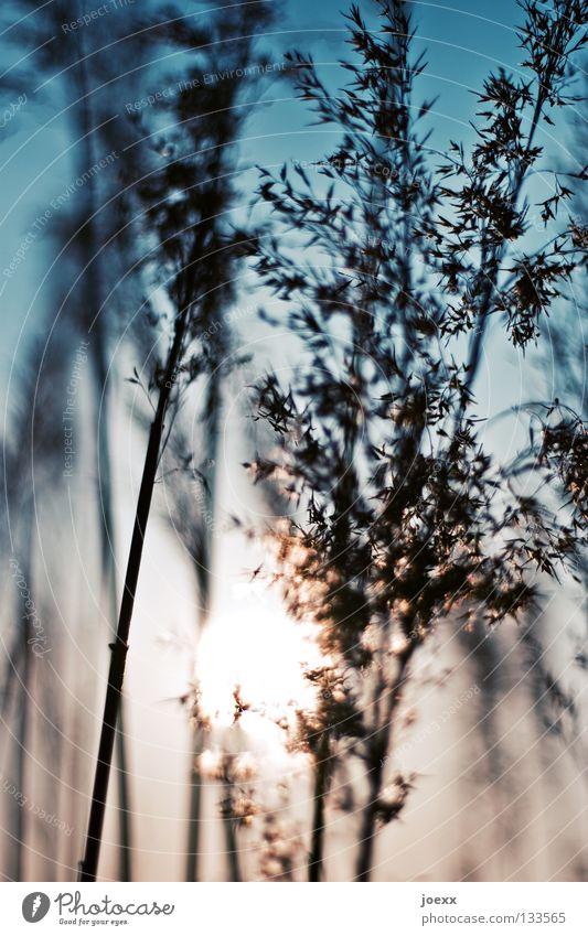 Seeufer Himmel blau Sonne Sommer Erholung Wärme Gras träumen Kraft Wind Schönes Wetter weich Physik zart Schilfrohr