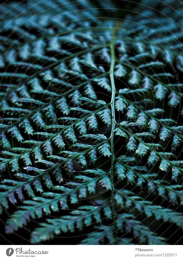 Strukturperspektive Umwelt Natur Pflanze Herbst Baum Farn Blatt Grünpflanze Wald schön grün Farbfoto Gedeckte Farben Außenaufnahme Strukturen & Formen