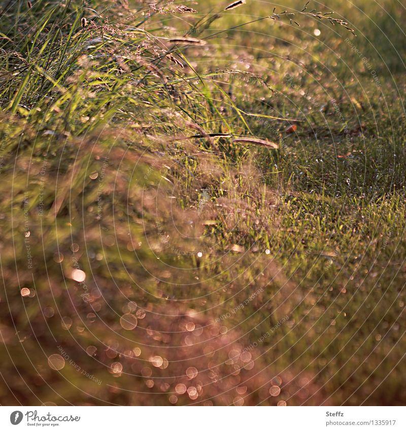 Gräser am Wegesrand im Nachmittagslicht Gras heimisch warmes Licht Achtsamkeit achtsam natürlich Lichtstimmung Achtsamkeit in der Natur Juni Lichtreflexe