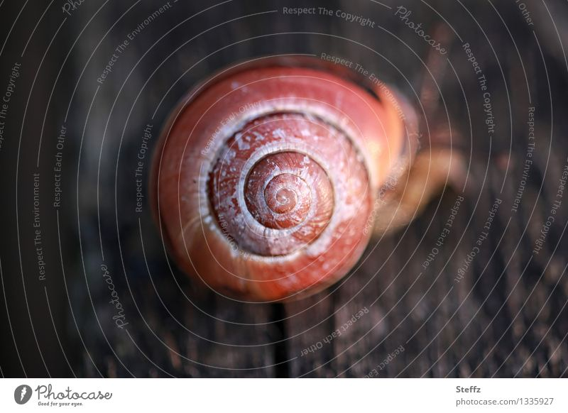 Schneckenspirale Natur braun rund Mitte Geometrie Spirale Symmetrie Schneckenhaus proportional