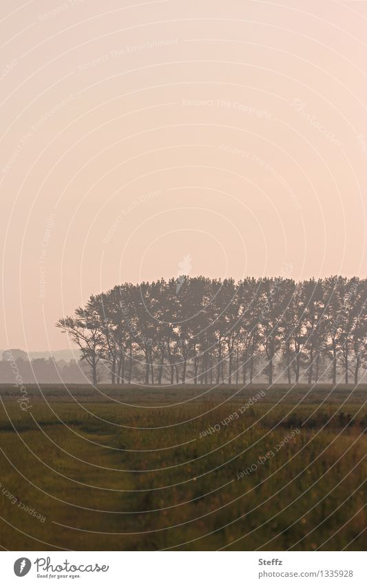 Stimmungslandschaft Natur Landschaft Pflanze Himmel Baum Gras Feld Romantik ruhig Lichtstimmung Wege & Pfade Nachmittag Nebel Stimmungsbild verträumt Einsamkeit