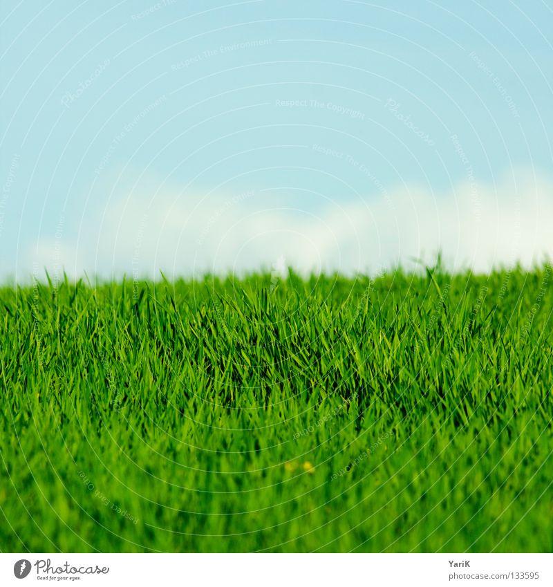 feldgrün Natur Himmel Blume blau Pflanze Sommer Freude ruhig Wolken Farbe Leben Erholung Wiese Gras Frühling