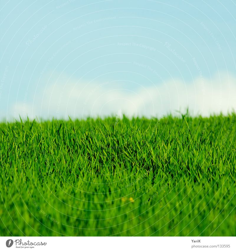 feldgrün Natur Himmel Blume grün blau Pflanze Sommer Freude ruhig Wolken Farbe Leben Erholung Wiese Gras Frühling