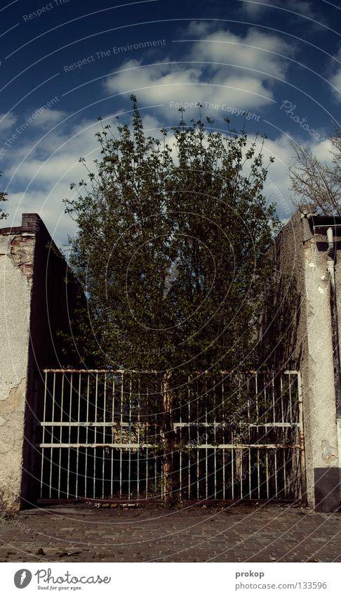Platzangst gefangen einsperren Käfig Zoo Baum Wolken Haus Wand Gebäude Haftstrafe Pflanze Umweltschutz bedrängen eng schmal Einsamkeit Himmel Trauer