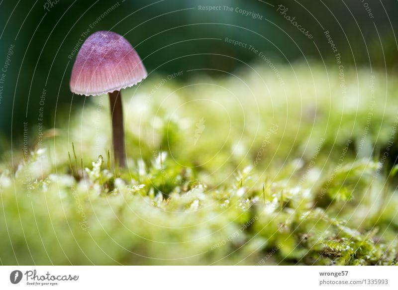 Schönling Natur Pflanze grün Farbe Wald gelb Herbst natürlich klein Erde violett nah Moos Pilz Waldboden winzig