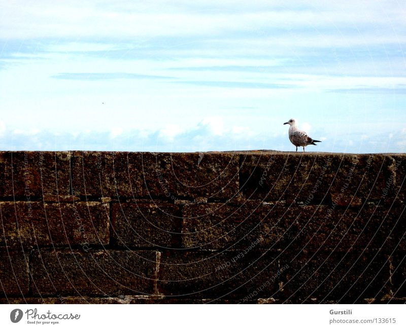 Himmelsrand II Wolken Mauer Vogel Horizont Möwe Republik Irland