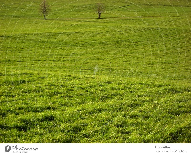 zwei harte Wellenreiter grün Baum Wiese Gras 2 Hügel Weide saftig grünen wellig Wellenform Grünfläche uneben
