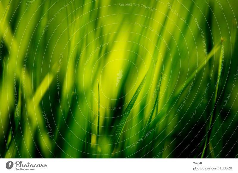 gräsern Natur Blume grün Pflanze Sommer Freude ruhig Farbe Leben Erholung Wiese Gras Frühling Freiheit Glück Wärme