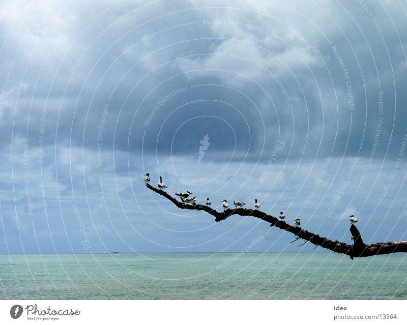 Vögel auf dem Ast Himmel Meer blau Wolken Ferne Freiheit Vogel Verkehr offen Ast türkis tief