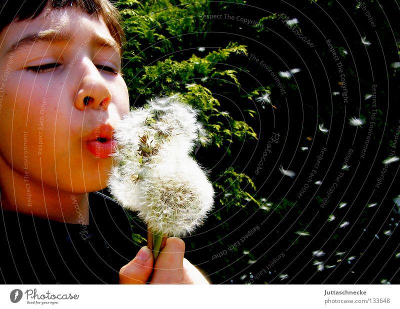 200/ Vielen Dank für die Blumen Junge Kind blasen Löwenzahn Konzentration Sommer Frühling fliegen Freude Samen lustig verteilen Garten wegpusten Juttaschnecke