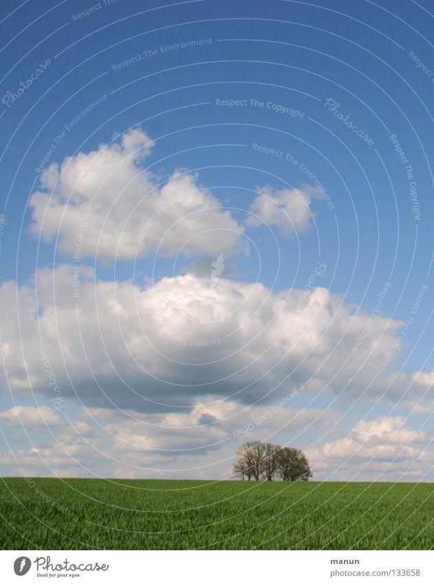 Durchatmen Luft Wiese Baum grün Wolken weiß frisch Frühling kalt Sauberkeit Weizenfeld Landwirtschaft Sommer Ferne Himmel Feld Horizont blau himmelblau grasgrün