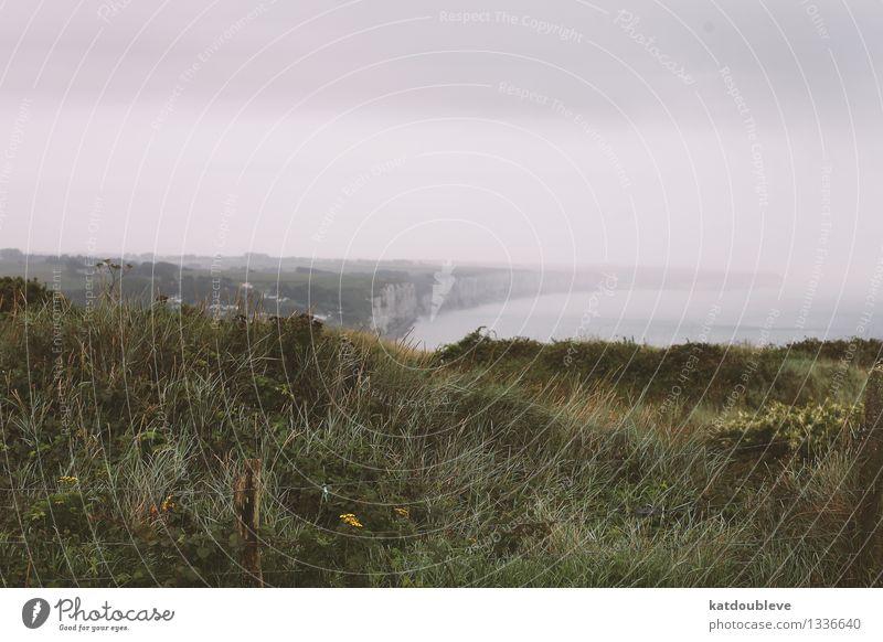 Fécamp Natur Ferien & Urlaub & Reisen Pflanze Wasser Meer Landschaft ruhig Wolken Ferne kalt Umwelt Herbst Wiese Gras natürlich Küste