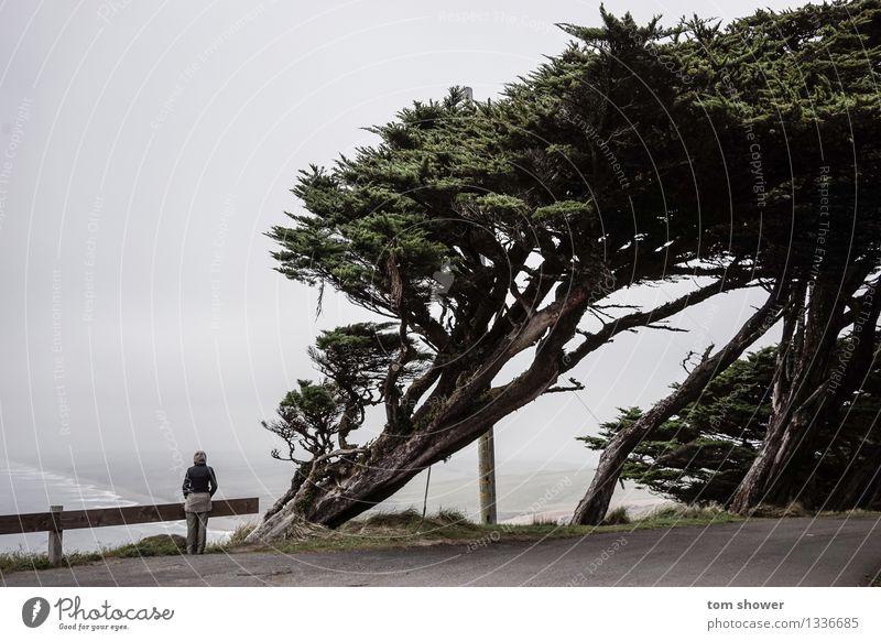 Meerblick Mensch feminin Junge Frau Jugendliche Erwachsene 1 30-45 Jahre Natur Landschaft Luft Wasser Himmel Herbst Wetter Nebel Baum Wildpflanze Gipfel Küste