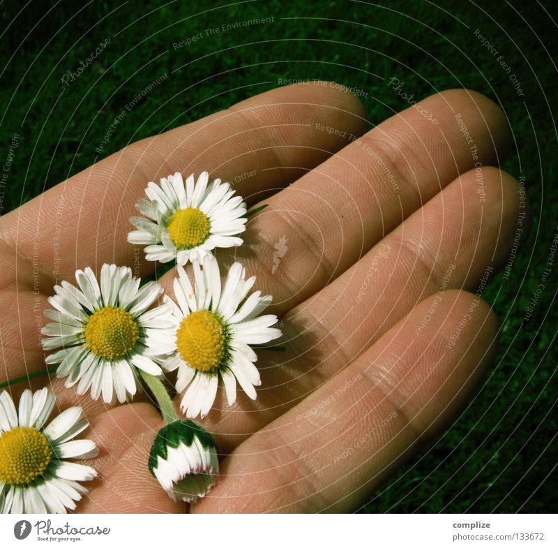 Hoffnungsvoller Romantiker! Himmel Mann Natur blau Hand weiß schön Pflanze Sommer Blume Einsamkeit gelb Wiese Gras Frühling 2