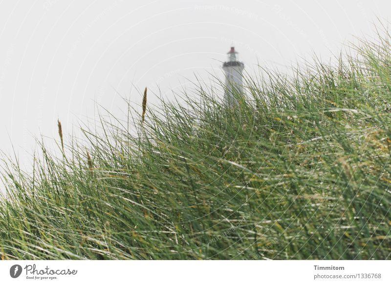 hoch hinaus | zwei Etappen. Natur Ferien & Urlaub & Reisen Pflanze grün Landschaft ruhig Umwelt Gefühle grau ästhetisch Gelassenheit Düne Leuchtturm Dänemark